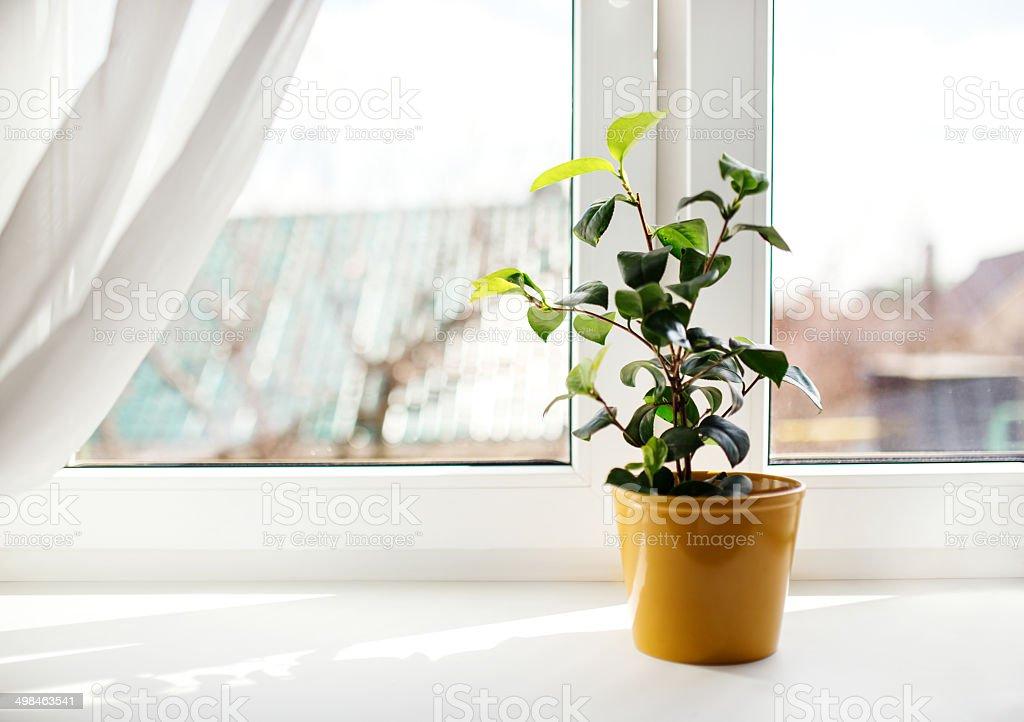 Decorative flowers in flowerpot on windowsill stock photo