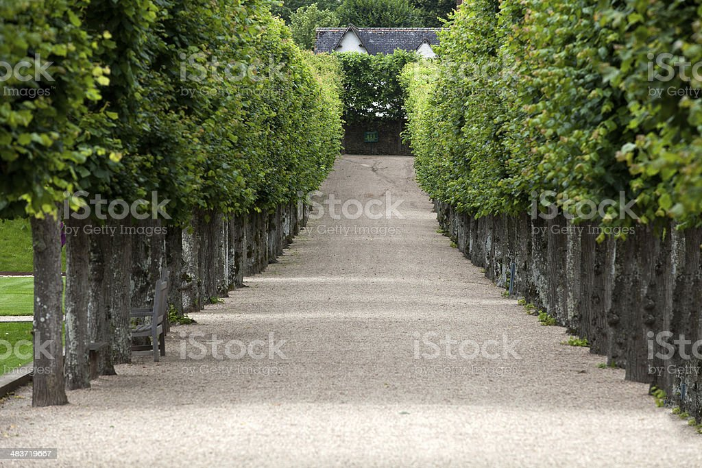decorative garden stock photo