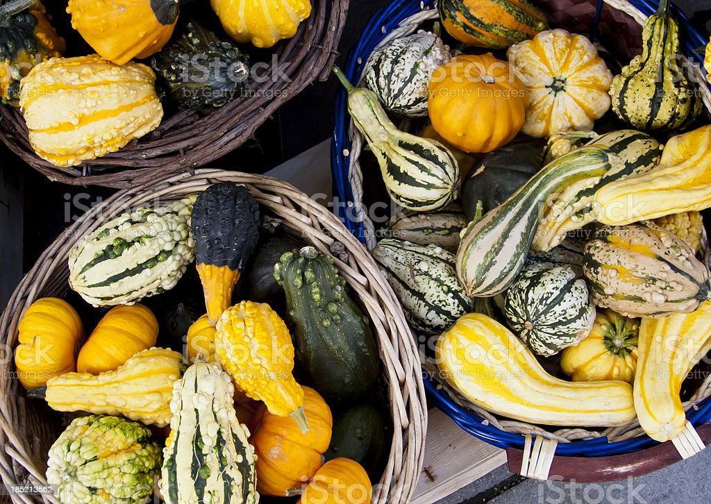 Decorative gourds stock photo