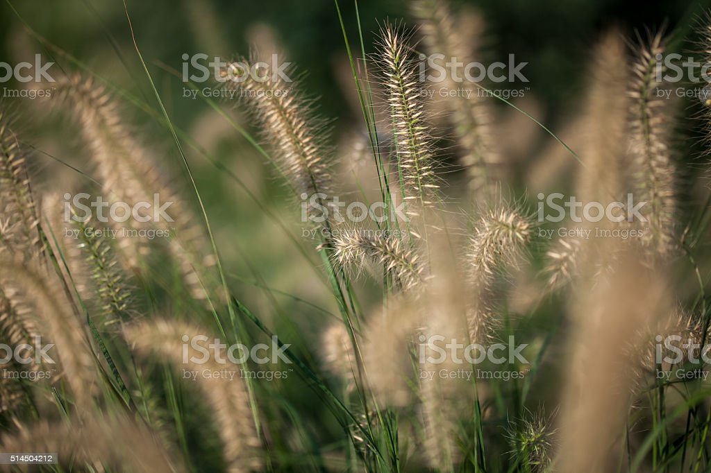 Decorative grass in a park stock photo
