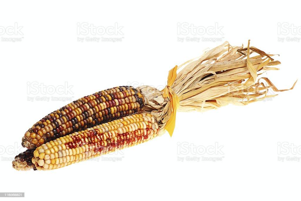 decorative indian corn royalty-free stock photo