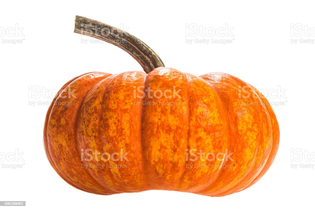 Decorative Jack-Be-little gourd on a white background stock photo
