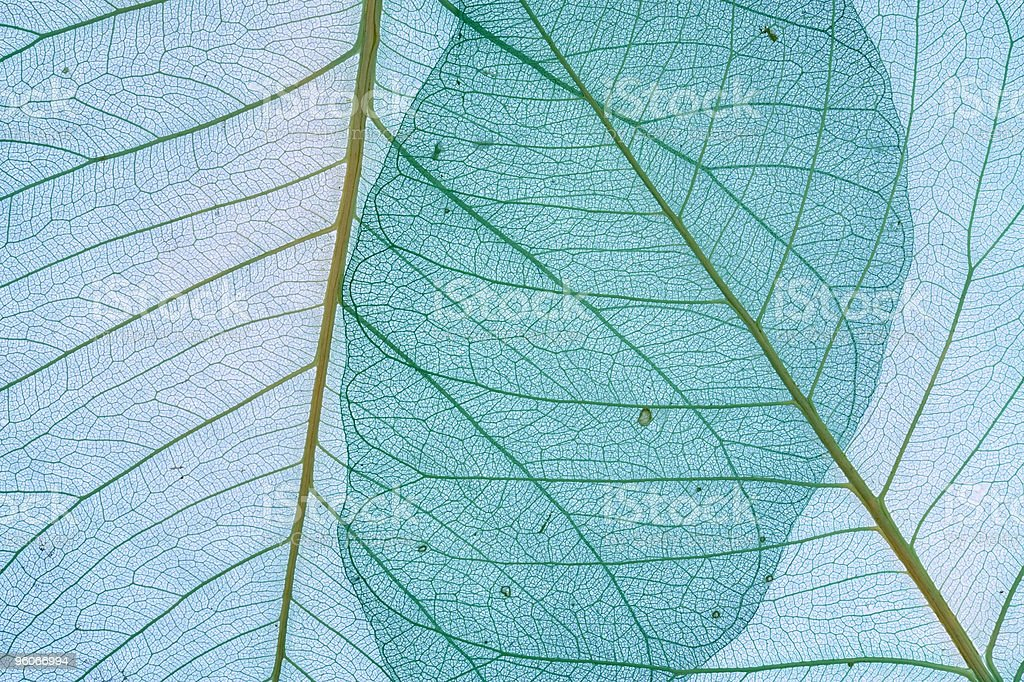 Decorative leaves background royalty-free stock photo