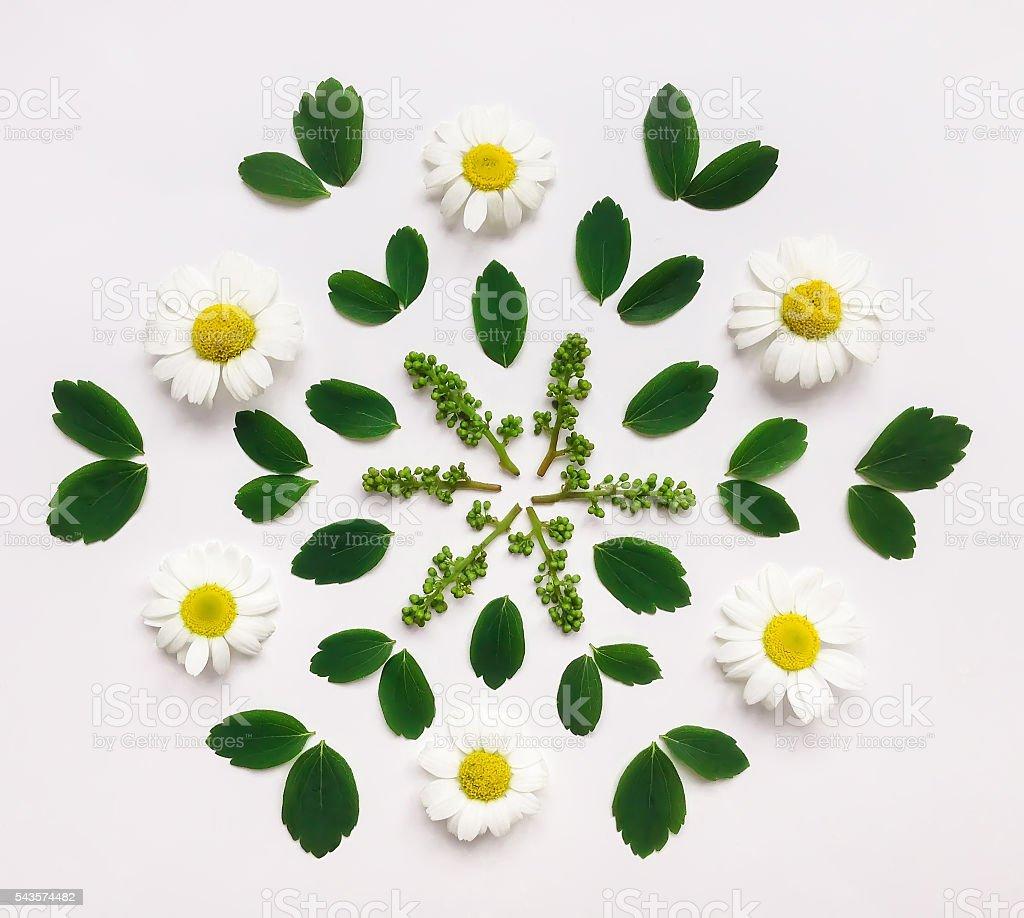Decorative mandala with chamomile flowers and leaves on white background stock photo