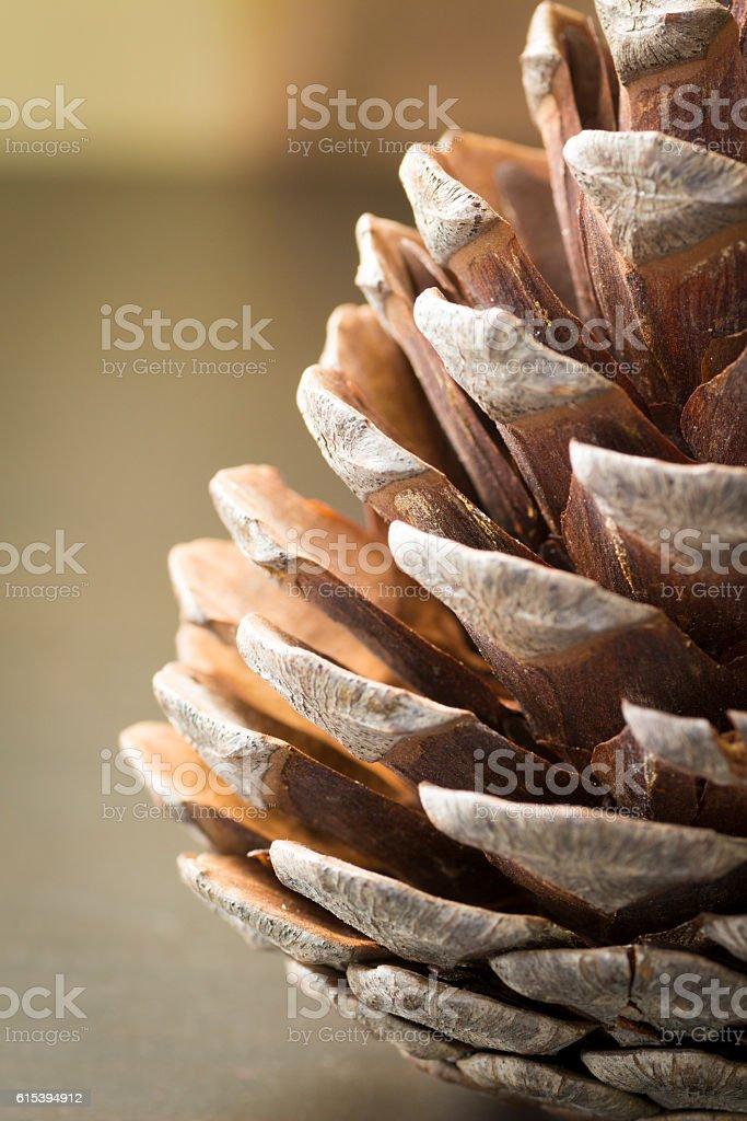 Decorative pine cone stock photo