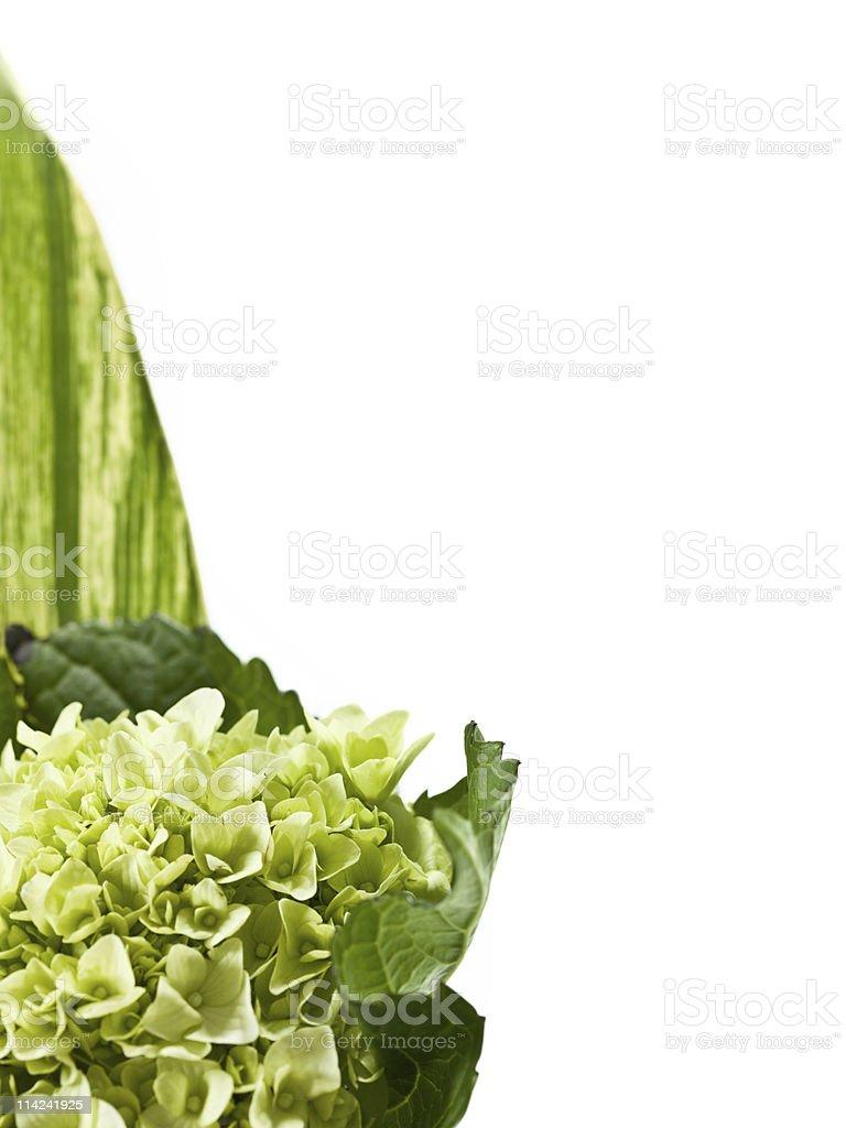 Decorative Plant on white background royalty-free stock photo