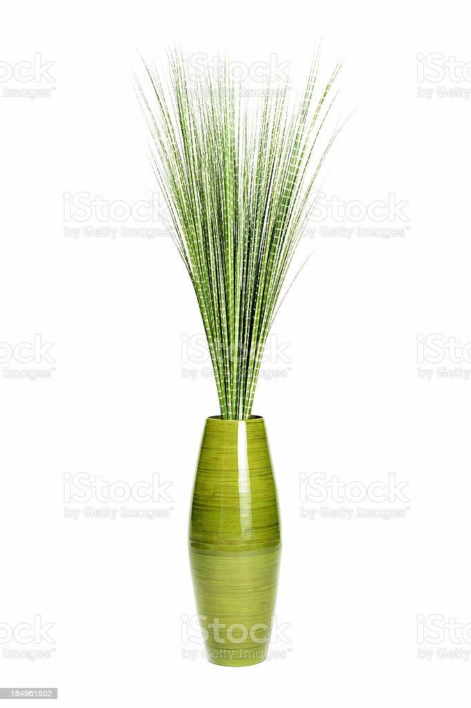Decorative plant royalty-free stock photo