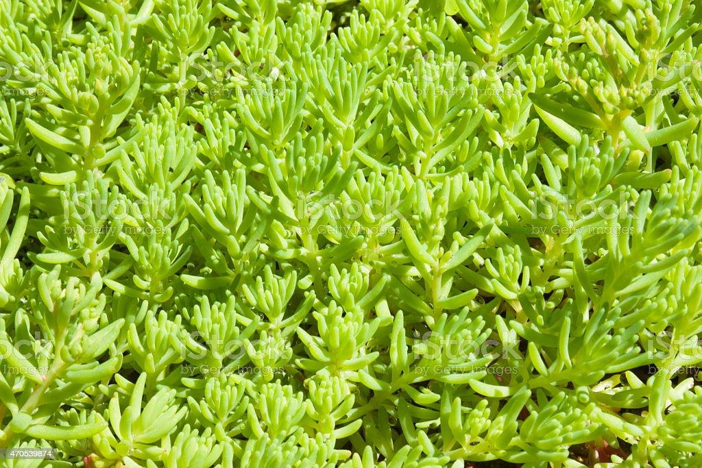 decorative plants cover macro shot stock photo
