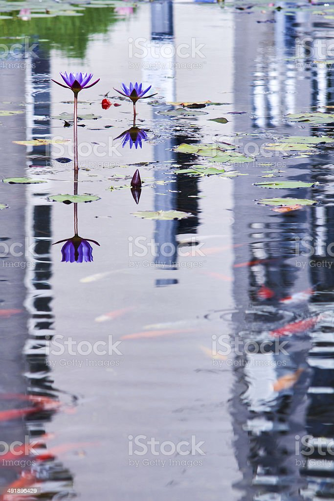 Decorative pond . stock photo
