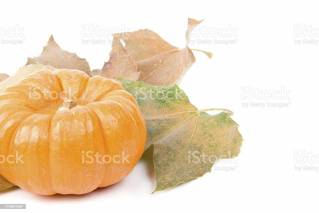 Decorative pumpkin and maple leaves stock photo
