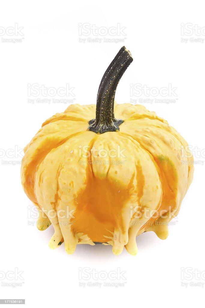 Decorative pumpkin squash isolated on white background royalty-free stock photo