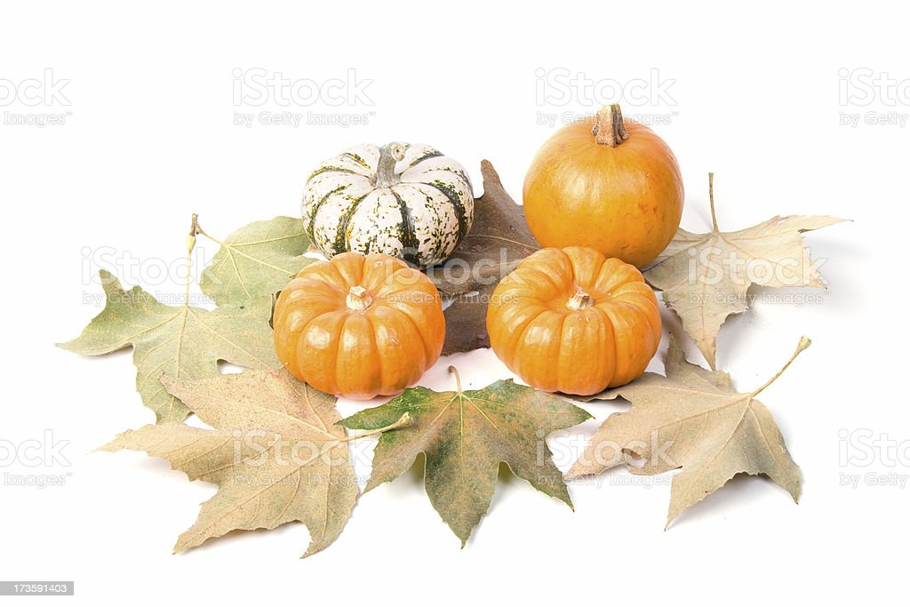 Decorative pumpkins and maple leaves stock photo