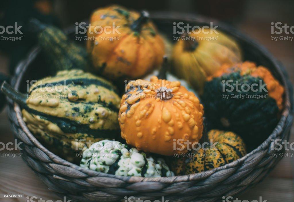 Decorative pumpkins in basket stock photo