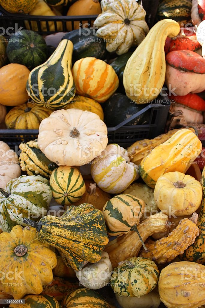 decorative pumpkins in fall stock photo