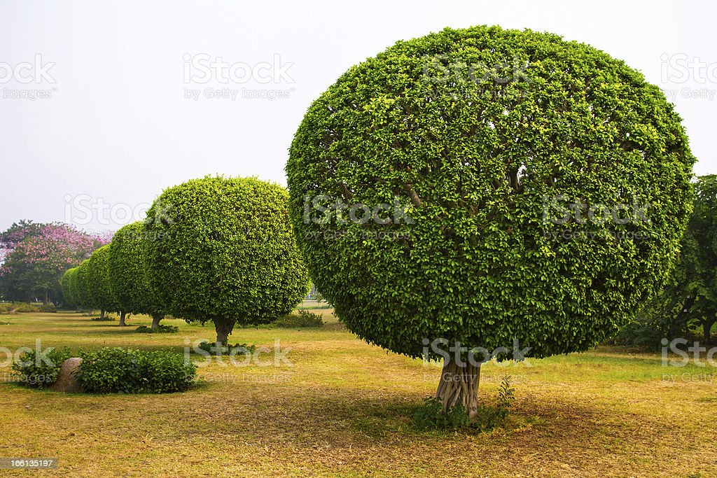 Decorative trees in the park of Lotus Temple, New Delhi royalty-free stock photo