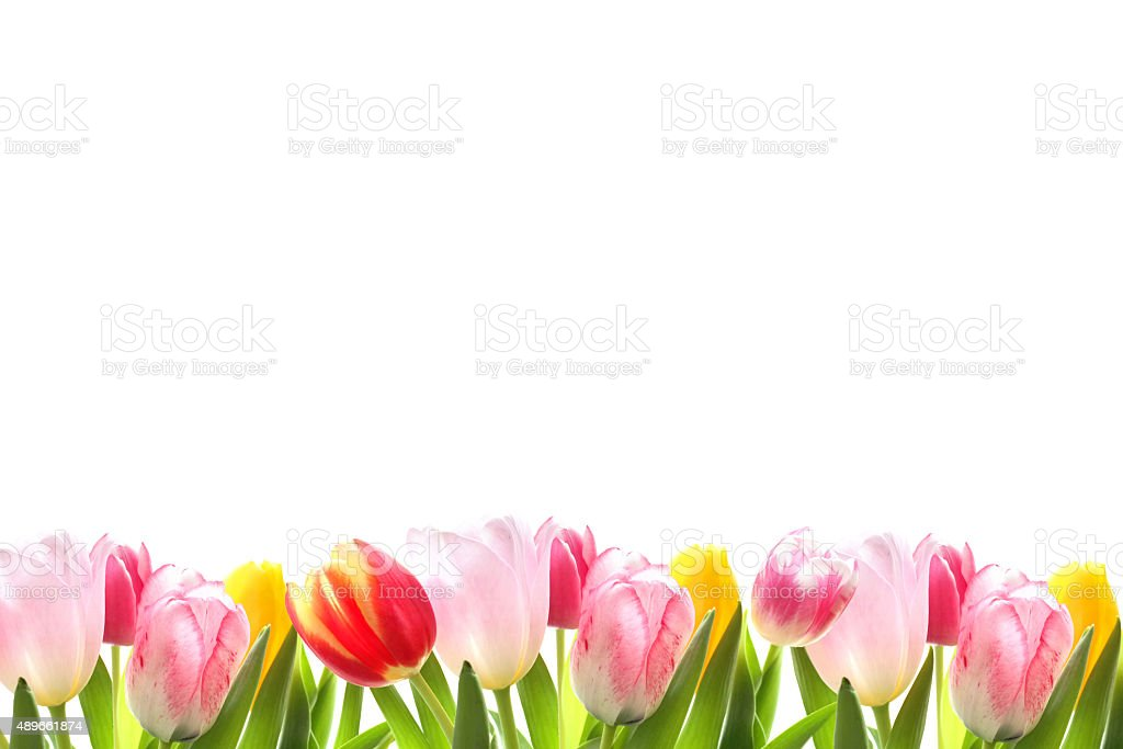 Decorative tulip border stock photo
