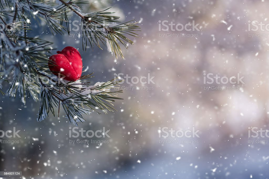 Decorative velvet red heart on snow-covered fir branch.Valentine Day card. stock photo