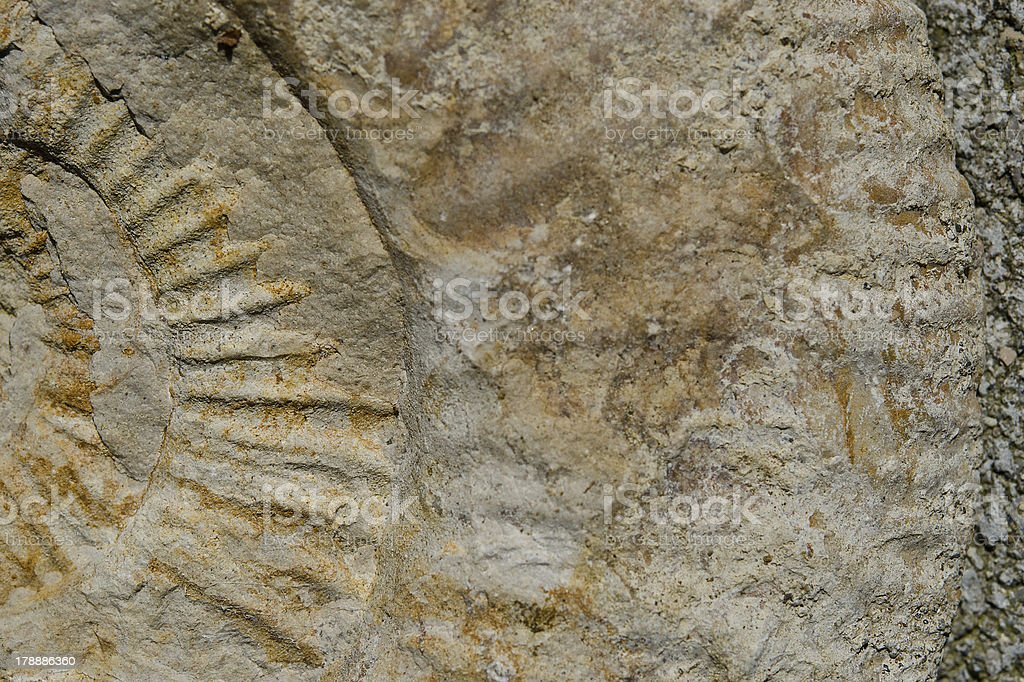 Decorative view of an Fossilization stock photo