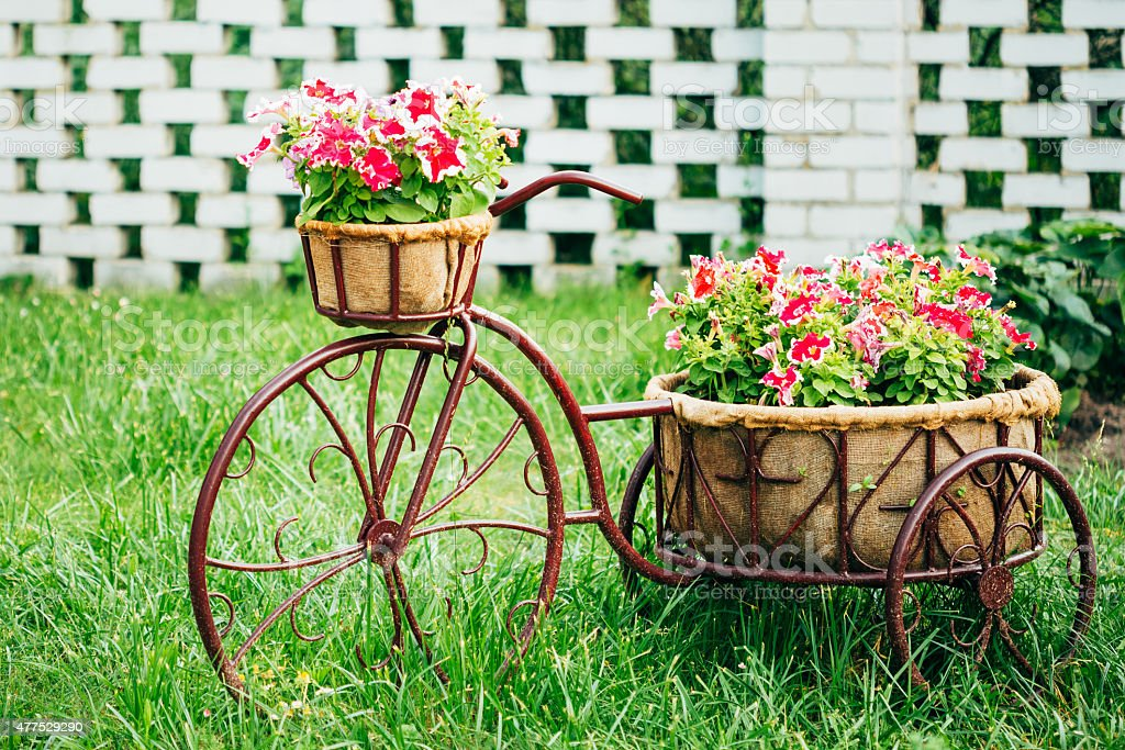 Decorative Vintage Model Old Bicycle Equipped Basket Flowers Gar stock photo