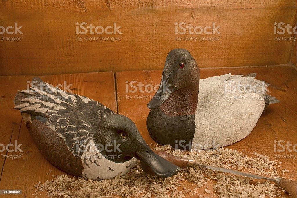 Decoys (Canvasback & Shoveler Drakes ) stock photo
