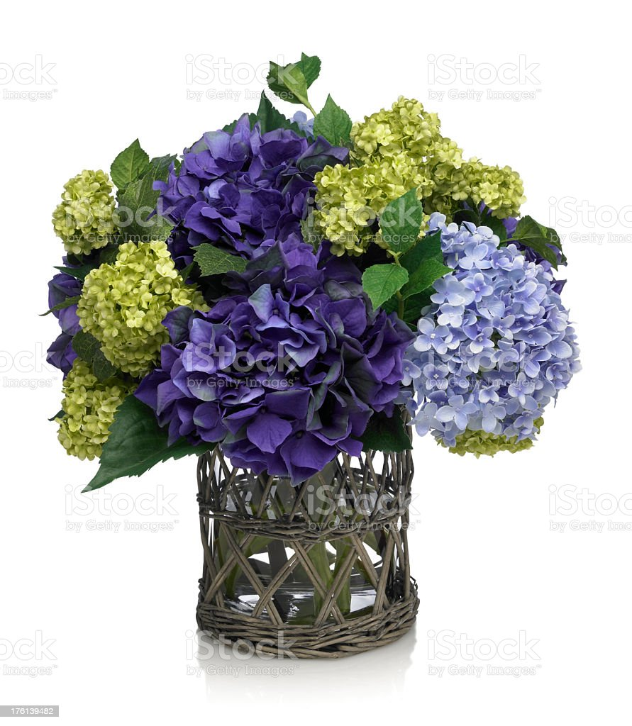 Deep Blue Hydrangea Bouquet on white background stock photo