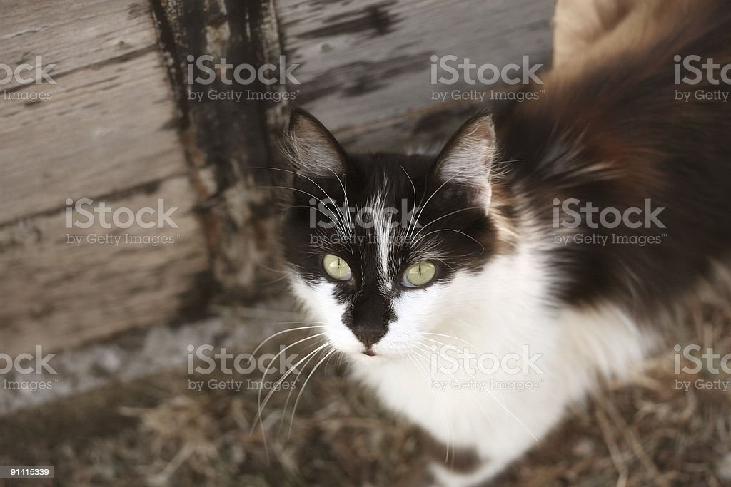 Deep cat look royalty-free stock photo