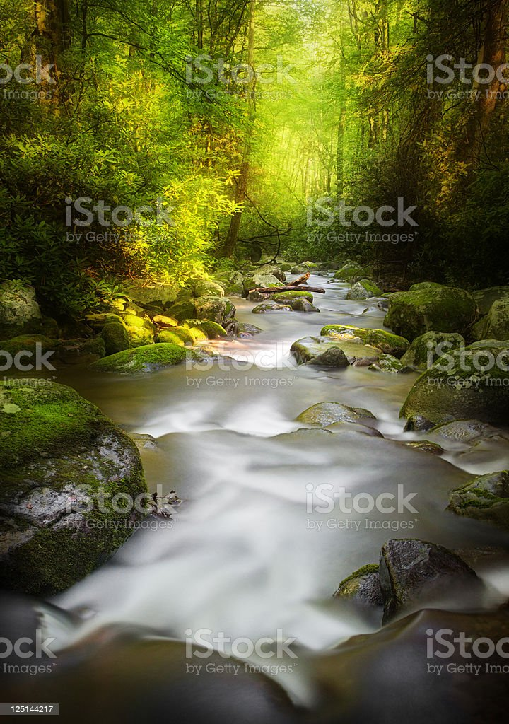 Deep Dark Woods royalty-free stock photo