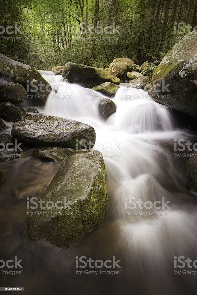 Deep Dark Woods with Cascading Creek royalty-free stock photo