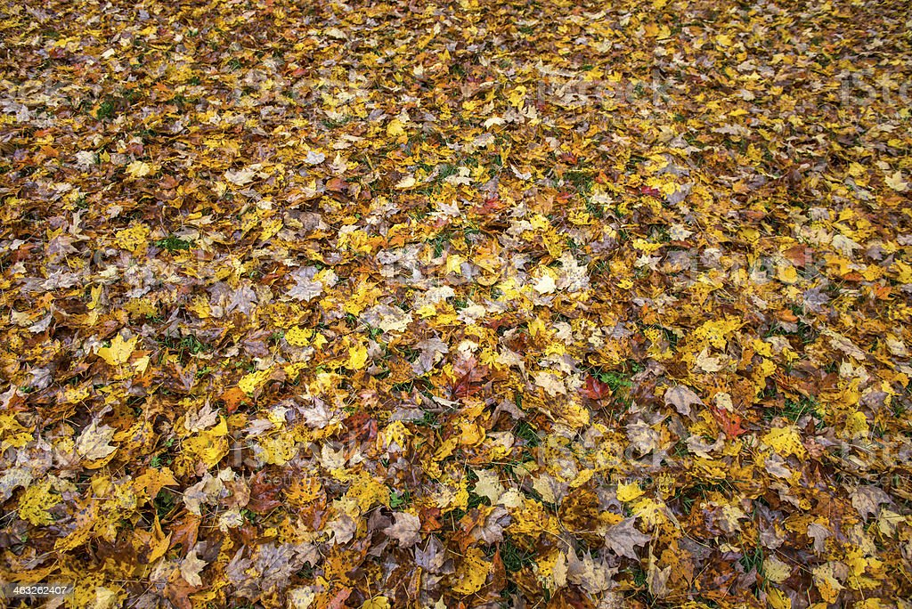 Deep Fall Colors royalty-free stock photo