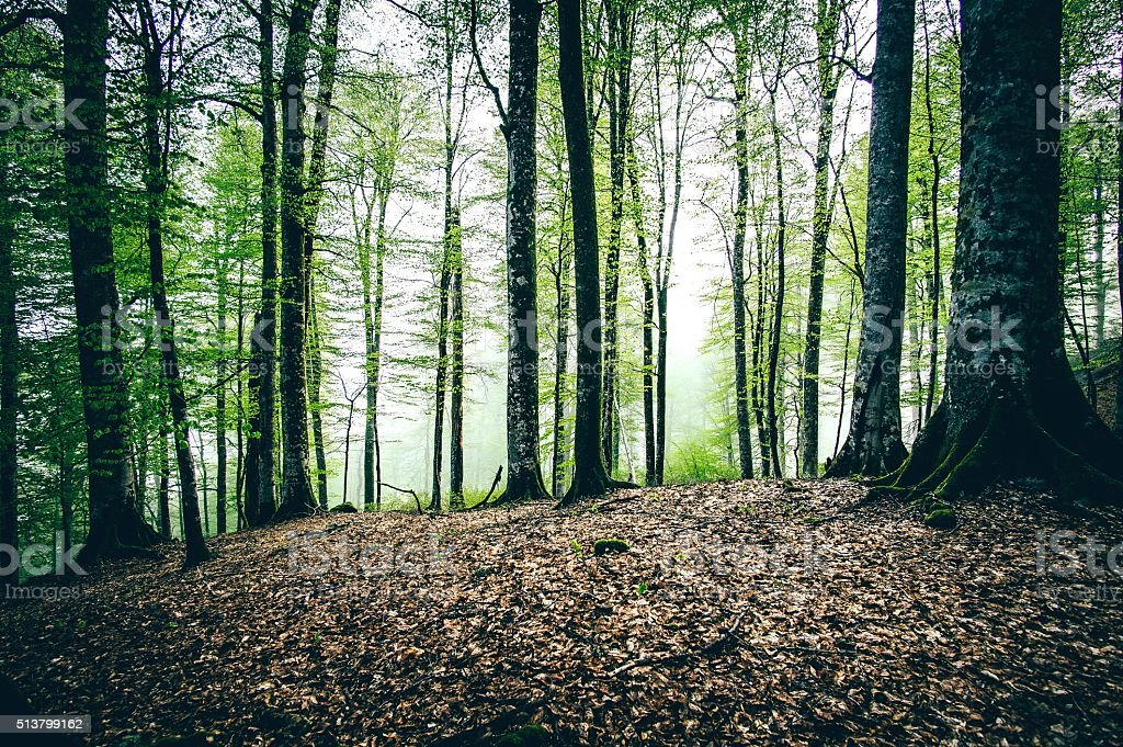 Deep Forest beautiful landscape stock photo