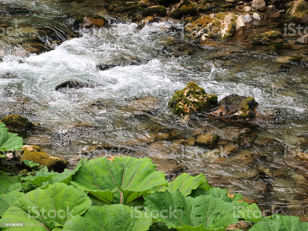 Deep forest brook royalty-free stock photo