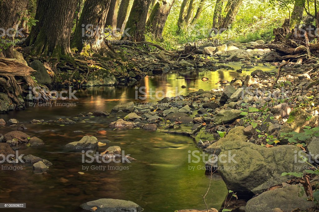 Deep forest creek with rocks stock photo
