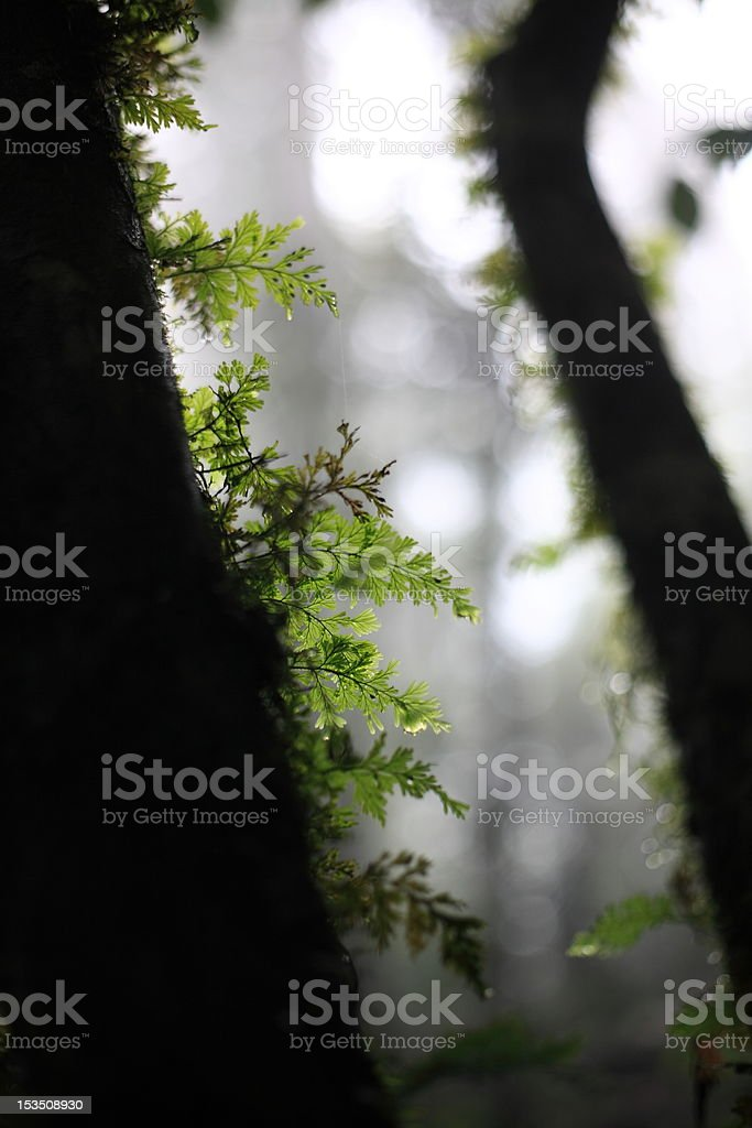 Deep forest. royalty-free stock photo