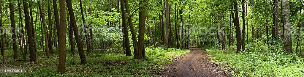 Deep forest royalty-free stock photo