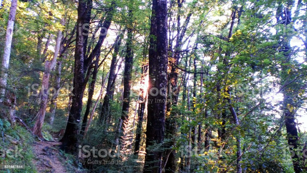 Deep forest walk trail Kahurangi national park stock photo