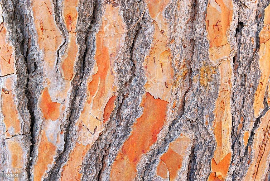 Deep furrows crease the bark of a tree stock photo