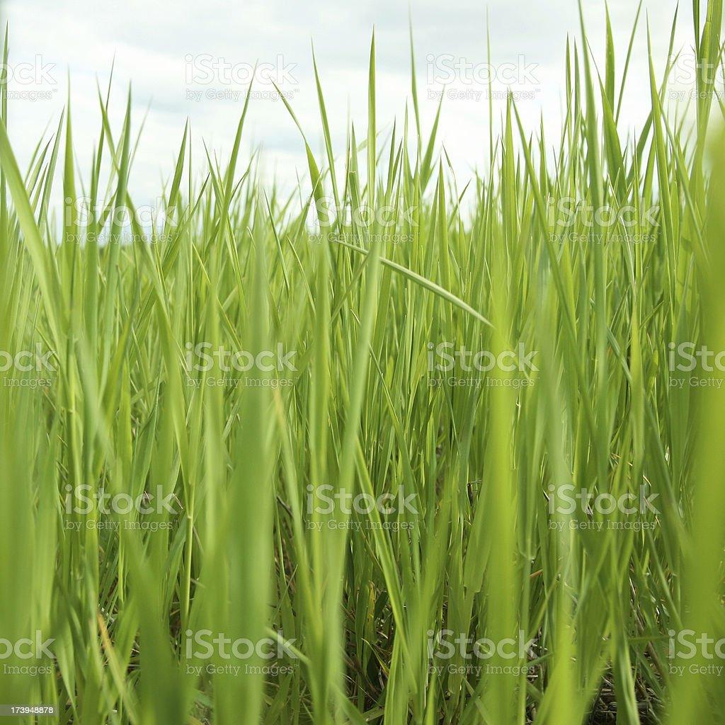 deep green royalty-free stock photo
