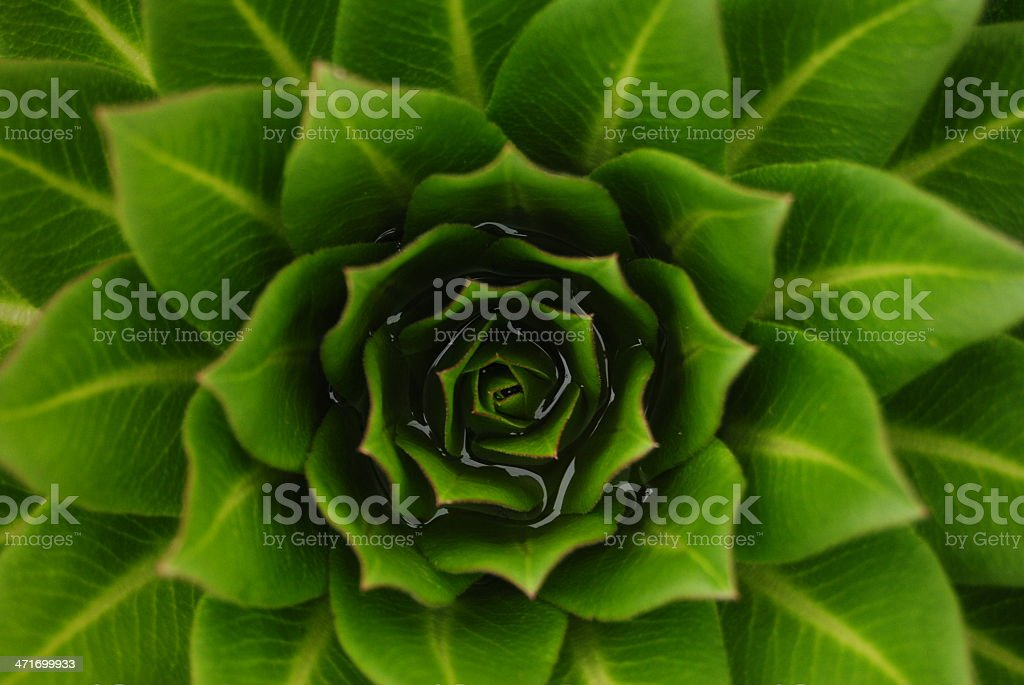 Deep Green stock photo