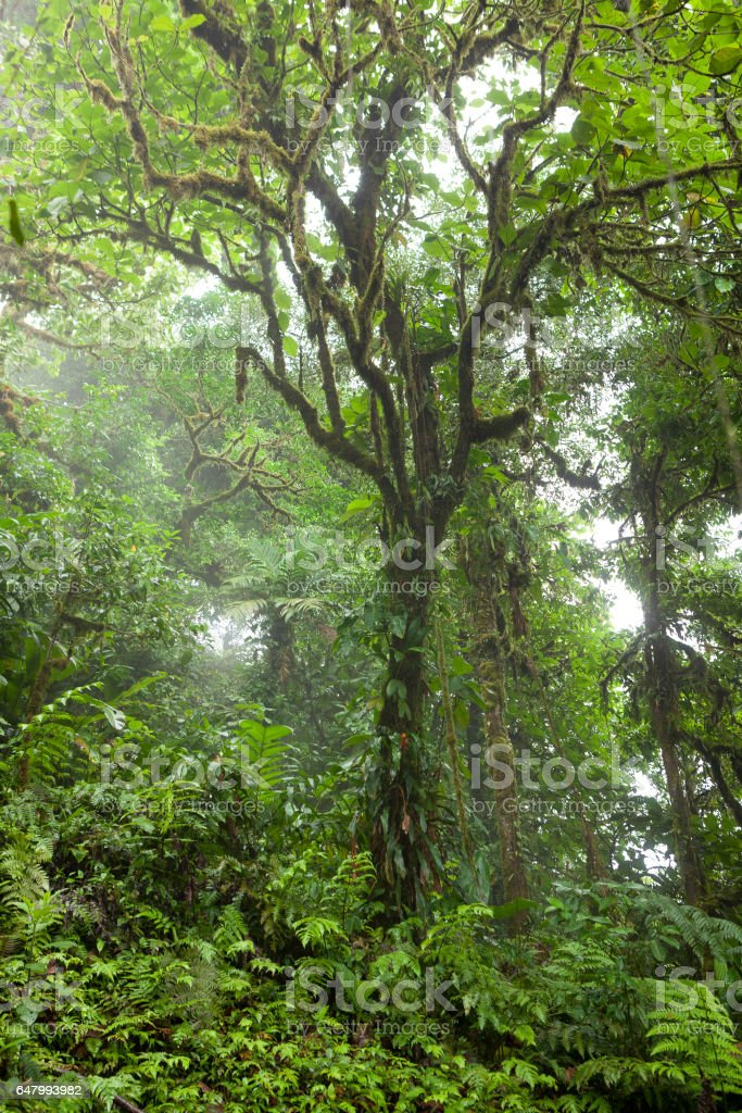 Deep in lush foggy rainforest stock photo