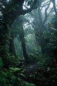Deep in lush rainforest