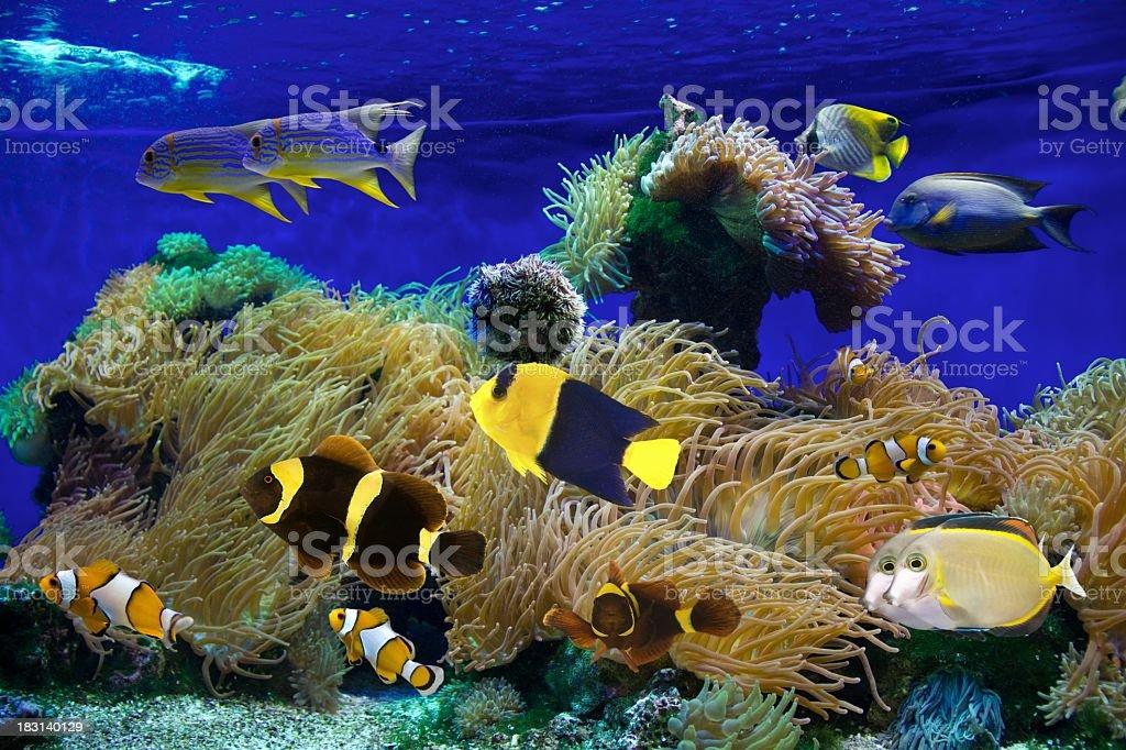 Deep in sea royalty-free stock photo