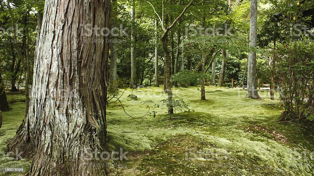 Deep in the Forest royalty-free stock photo
