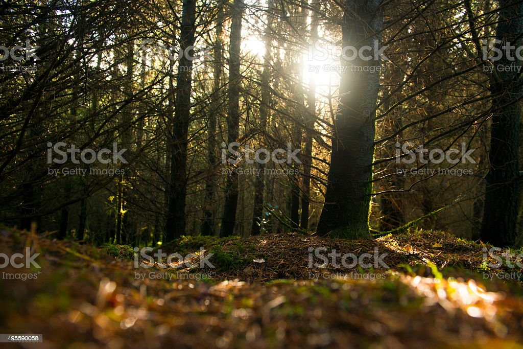 Deep in the forest stock photo