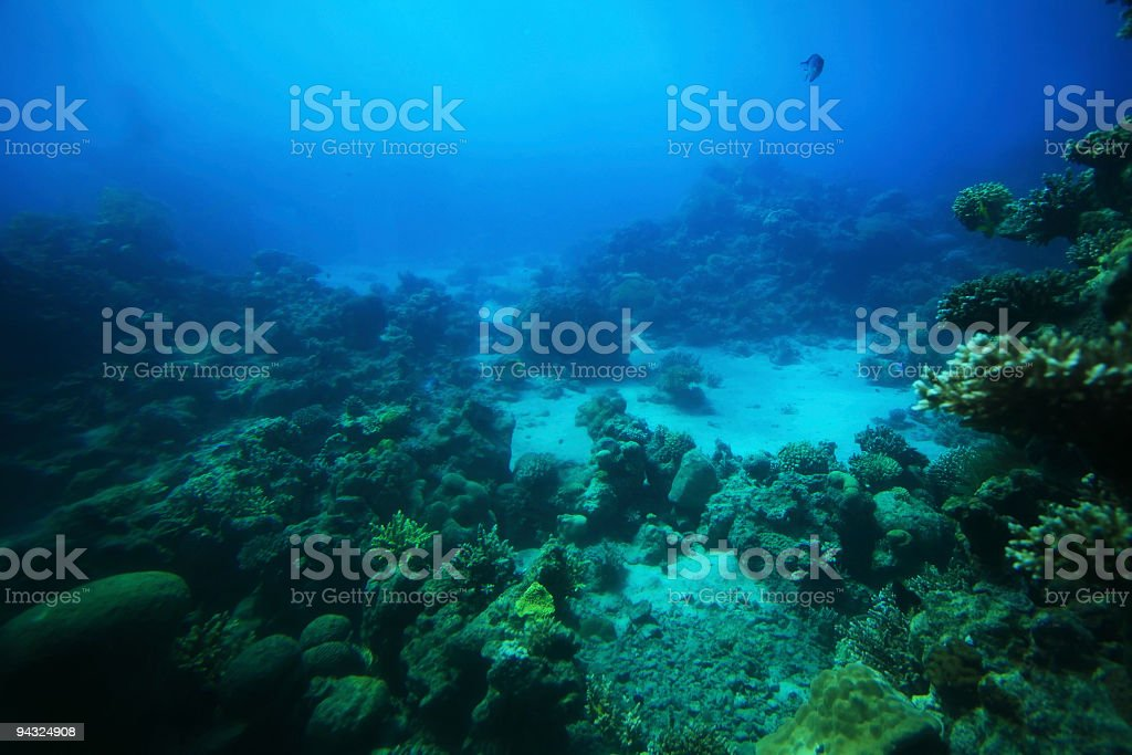 Deep in the sea royalty-free stock photo