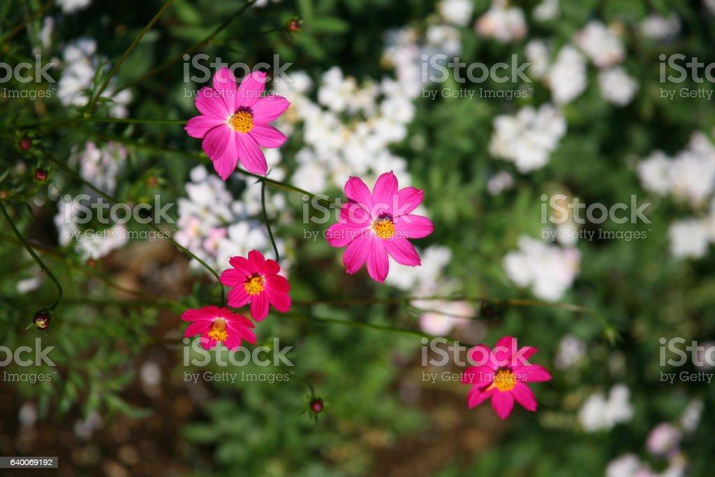 Deep pink flowers pink purple flowers in summer stock images deep pink flowers pink purple flowers in summer mightylinksfo