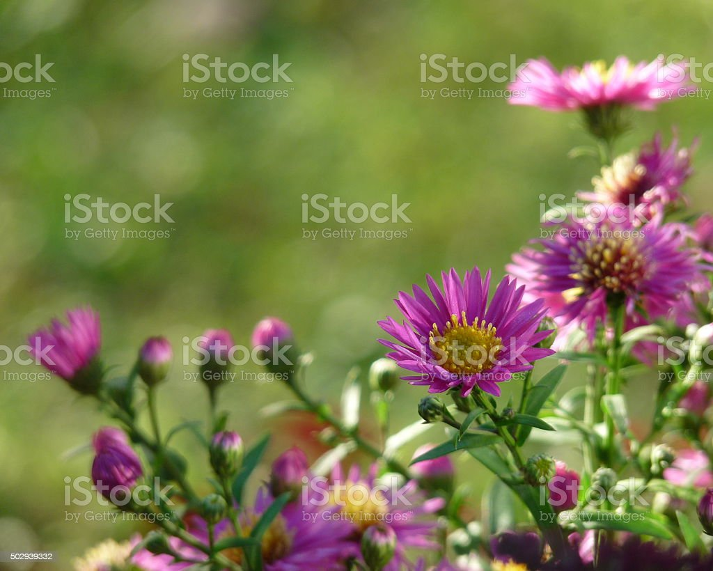 Deep Pink Purple Spring Flowers Frame Dreamy Bokeh Background Scenic stock photo