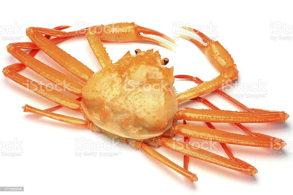 deep red snow crab stock photo