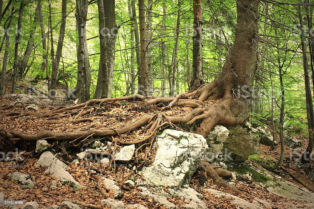 Deep Roots royalty-free stock photo