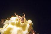 Deep sea Crabs
