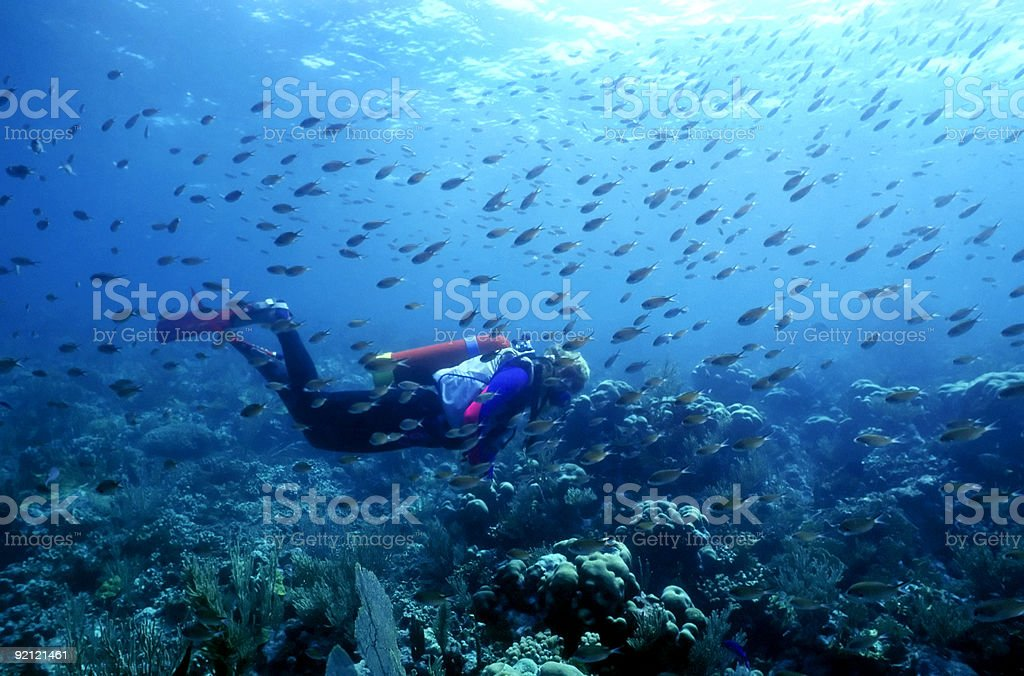 Deep sea diver swimming with the fish stock photo